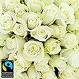 50-roses-blanches-5311.jpg