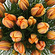 Collection Hiver> -BOUQUET DE TULIPES PRINCESSE IRÈNE XL -