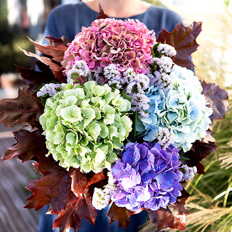 Collection Automne> -BOUQUET D'HORTENSIAS -