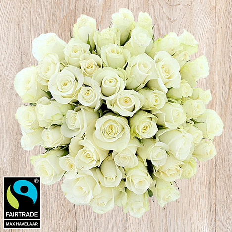 Mariage> -50 ROSES BLANCHES -