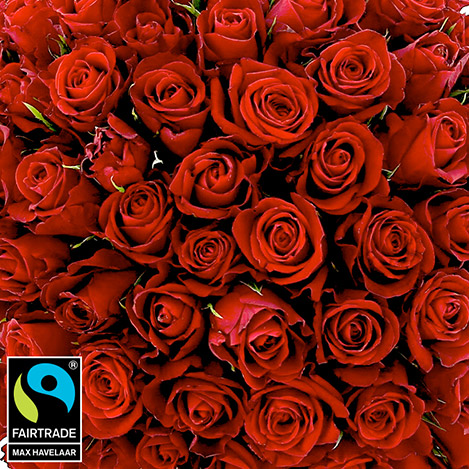 bouquet-de-roses-rouges-sur-mesure-5304.jpg