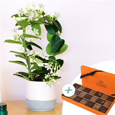 Stephanotis et son coffret de chocolats